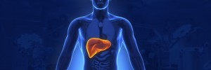 liver that are vital for fertility
