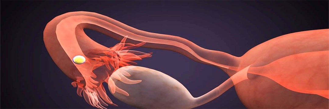 Understanding Female Reproductive System