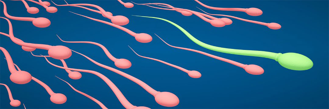 Sperm donating requirements in kansas